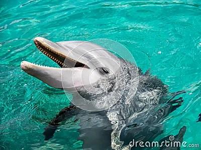 以第一人稱的口吻介紹海豚- 問