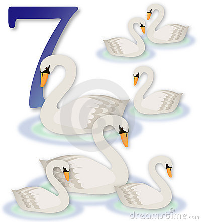 12 Days Of Christmas 7 Swans A Swimming Royalty Free
