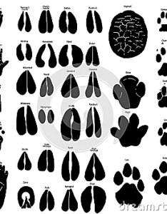 Wild animal paw print identification also herbivores best blog rh herbivoreswildanimalbestblogspot