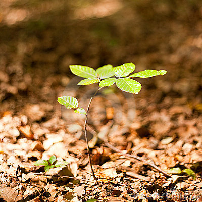 Baby Tree Stock Images  Image 10957674