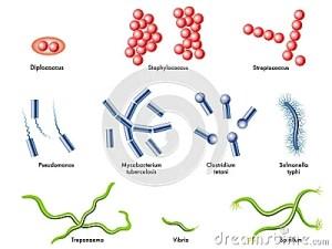 Bacteria Royalty Free Stock Photos  Image: 26522648