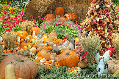 Desktop Wallpaper Fall Flowers A Bountiful Autumn Harvest Stock Images Image 27051084