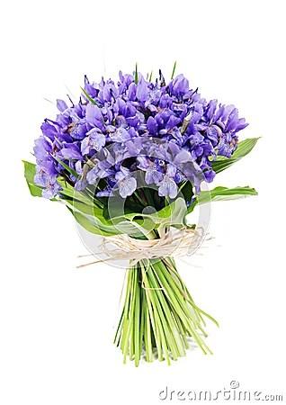 Bouquet Of Flowers Iris Royalty Free Stock Image Image
