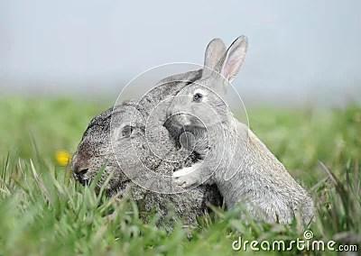 Baby Cute Animals Wallpaper Bunny Mom And Baby Rabbit Stock Photos Image 24979303