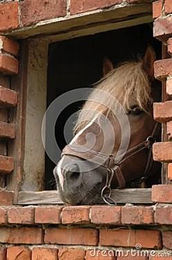 Resultat d'imatges de caballo ventana