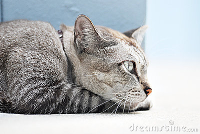 Cat Side View Stock Images  Image 18419424