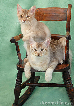 Cats On Rocking Chair Royalty Free Stock Image  Image