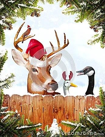 Christmas Animals Royalty Free Stock Photography Image