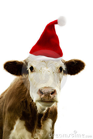 Christmas Cow Royalty Free Stock Images Image 11344069