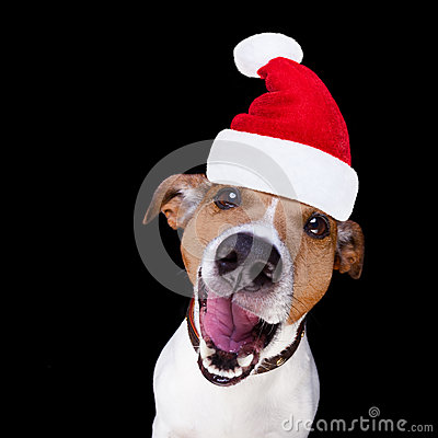 Christmas Santa Claus Dog Isolated On Black Stock Photo