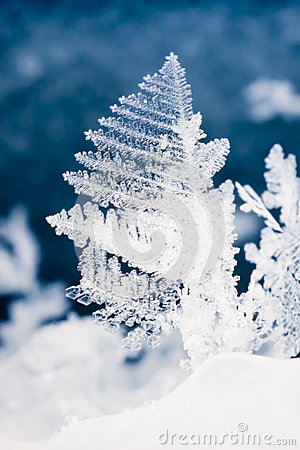 Free 3d Snow Falling Wallpaper Close Up Of Real Snowflake Royalty Free Stock Image