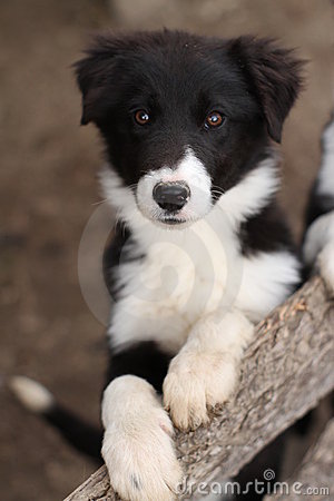Cute Wallpaper Save The Animals Cute Black And White Puppy Dog Stock Photos Image 20107073