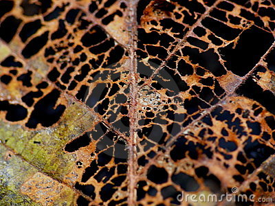 Decay Royalty Free Stock Photo  Image 7537005