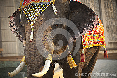Decorated Elephant Stock Images  Image 31895094