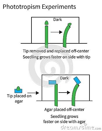 Experiments Demonstrating Phototropism In Plants Stock