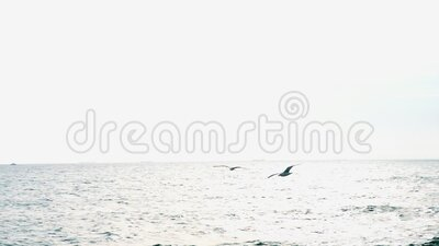 Seagulls Flying Against The Blue Sky. Flock Of Birds Flies