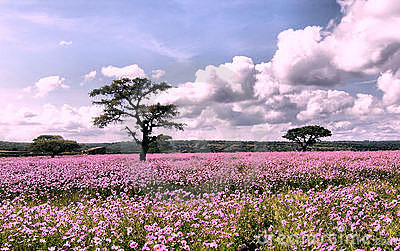 3d Pink Flower Wallpaper Flowers Landscape Stock Photo Image 3801740