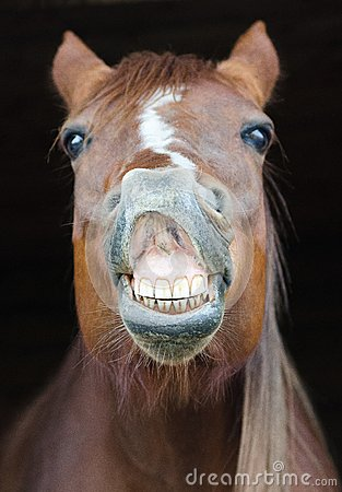 Funny Horse Portrait Stock Photography Image 31074022