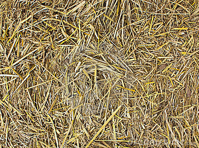 Hay Seamless Background Royalty Free Stock Image  Image