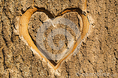 Autumn Falling Leaves Wallpaper Heart Carved In The Bark Stock Photos Image 30742923