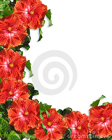 Wallpaper Wedding Girl Hibiscus Flowers Border Background Royalty Free Stock