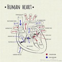 Human Taste Buds Diagram Gigabit Wiring A Heart Stock Vector - Image: 58648028