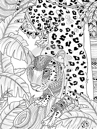 Jungle Leopard Coloring Page Stock Illustration Image
