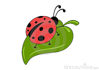 ladybug leaf stock