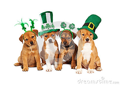 Cute Wallpaper St Pattys Day Pupppy Large St Patricks Day Dog Stock Photo Image 50358674