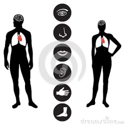 body human outline icon vector medical female parts male icons clipart drawing various organs eye figure illustration basic face clipartmag