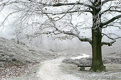 Misty wintry landscape and oak tree