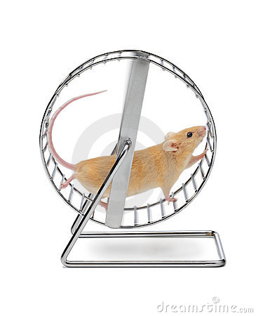https://i0.wp.com/thumbs.dreamstime.com/x/mouse-exercise-wheel-13758830.jpg