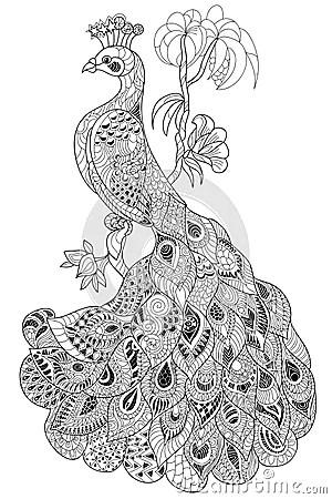 Peacock Stock Vector Image 59497156