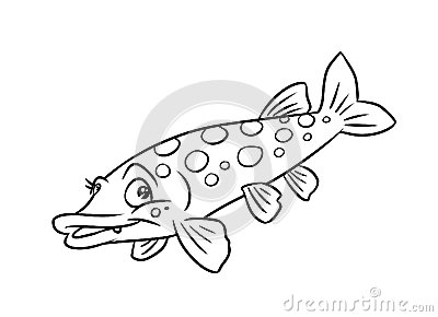 Pike Fish Illustration Coloring Pages Royalty Free Stock