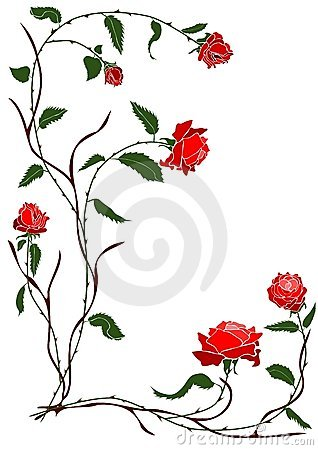 Red Rose Vine Royalty Free Stock Photo  Image 4317375