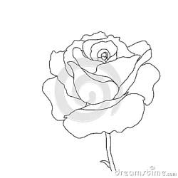 outline rose flower background