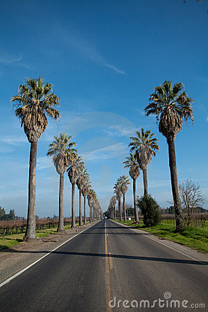 Row Of Palm Trees Along Side A Road Royalty Free Stock