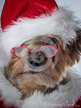 Santa Claus Dog Christmas Dog With Glasses Stock Photo