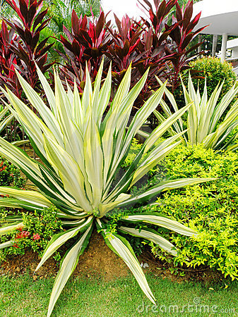 tropical style landscaping stock