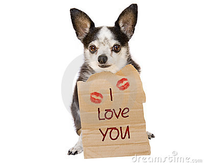 Download All Cute Wallpaper Valentine Dog Love Stock Image Image 1709051
