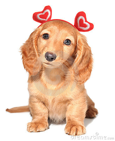 Valentine Puppy Royalty Free Stock Images Image 12554259