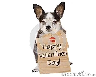 Valentines Day Dog Kiss Royalty Free Stock Photos Image