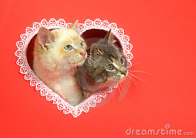 Valentines Day Kittens With Copy Space Stock Photo Image