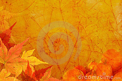 Fall Leaves Wallpaper Border Vintage Harvest Background Stock Image Image 3488581