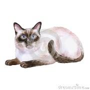 watercolor portrait of siamese