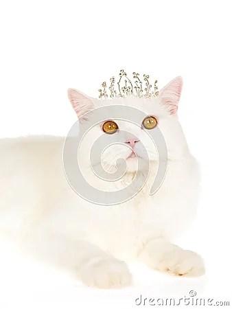 White Cat Wearing Tiara Crown Royalty Free Stock Images