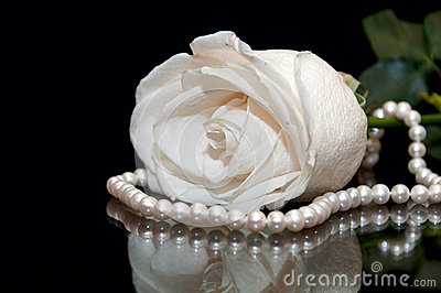Thank You Wallpaper Animated White Rose Pearl Black Background Stock Images Image