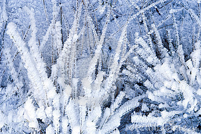 Winter Background With Natural White Frost And Ice Stock