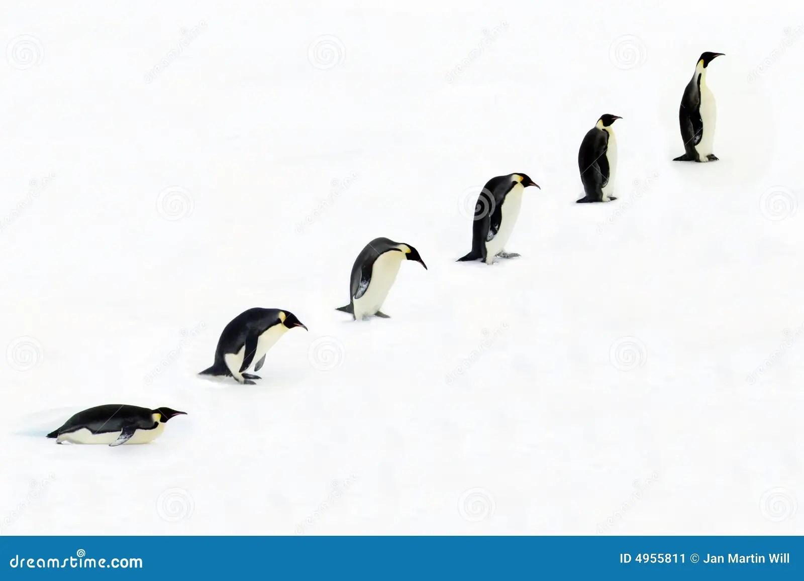 Évolution d'un pingouin illustration stock. Illustration