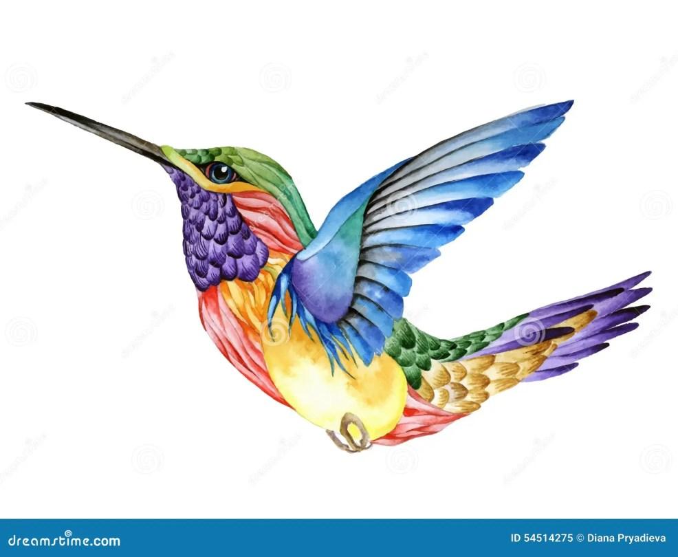 татуировка колибри картина акварели иллюстрация вектора